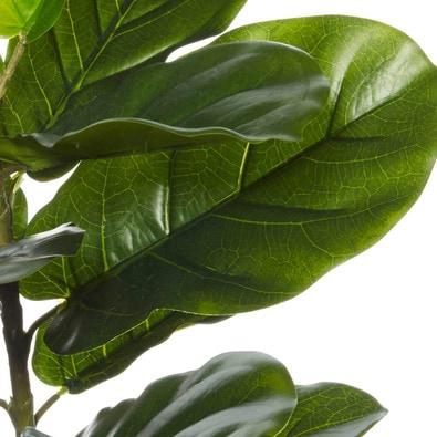 ROGUE Fiddle Leaf Tree