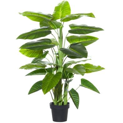 ROGUE Evergreen Plant