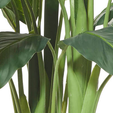 ROGUE Spathiphyllum Plant