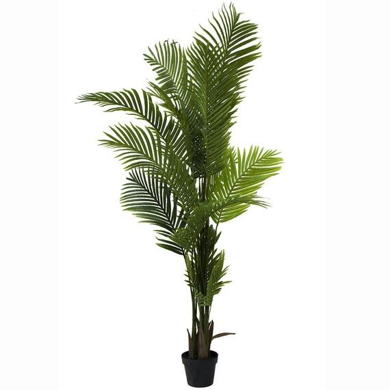 ROGUE Areca Palm
