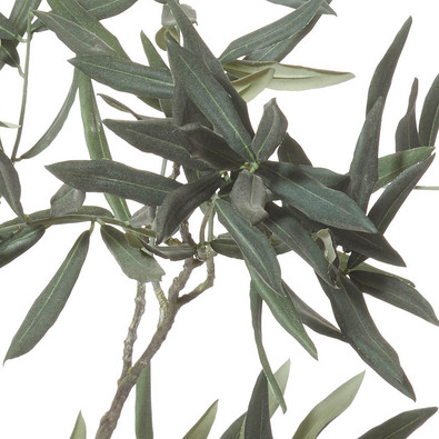 ROGUE Olive Branch