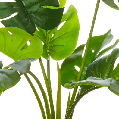 ROGUE Monsteria Plant