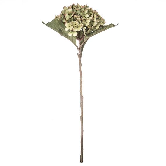 ROGUE Hydrangea Stem