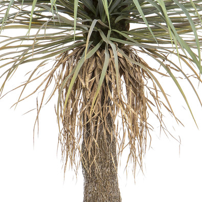 GRASS TREE Artificial Potted Plant