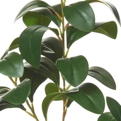 ROGUE Lush Leaves Spray