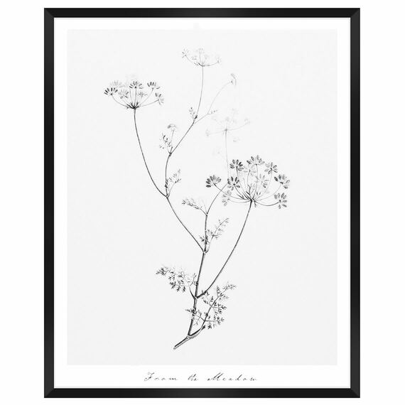 FROM THE MEADOW Framed Print
