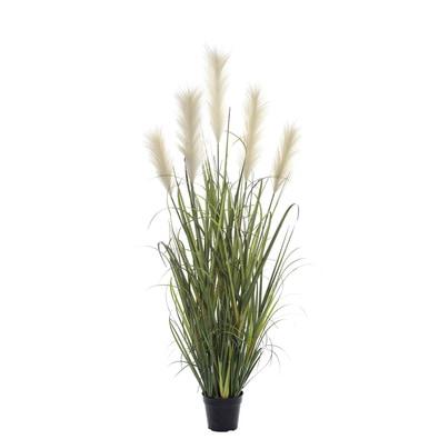 PAMPAS GRASS-GARDEN Pot