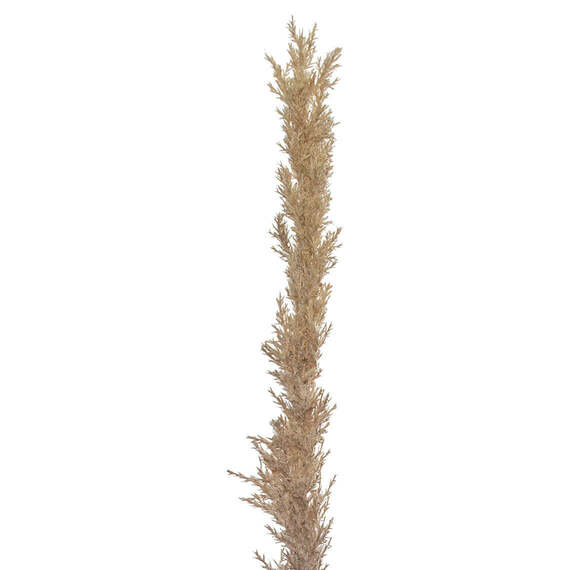 ROGUE Reed Grass Stem