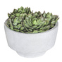 ROGUE ARR Cabbage Echeveria Pot