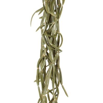 CACTUS Hanging Vine