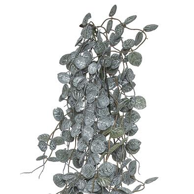 SILVER FALLS BUSH Hanging Vine